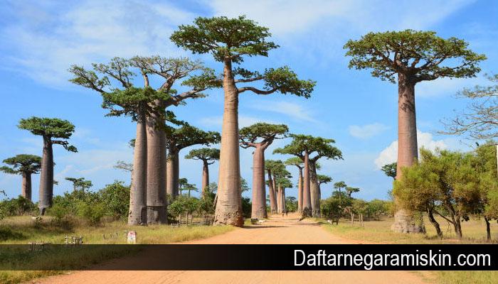 Beberapa Fakta Mengagumkan Madagaskar